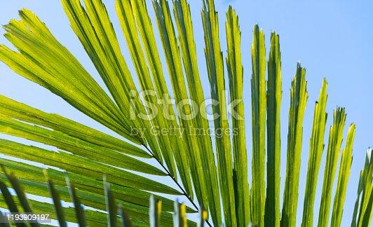 1145102719 istock photo Palm leaf under blue sky 1193909197
