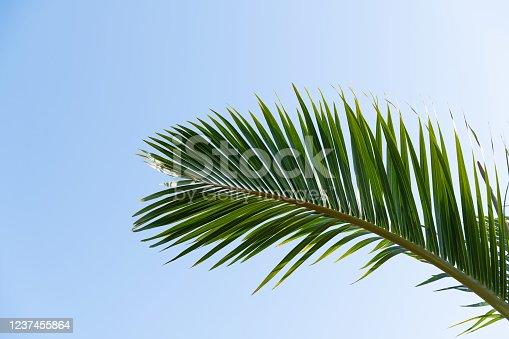 1145102719 istock photo Palm leaf under blue sky 1237455864