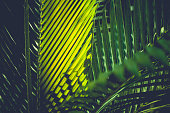 colorful shiny green palm leafs background.