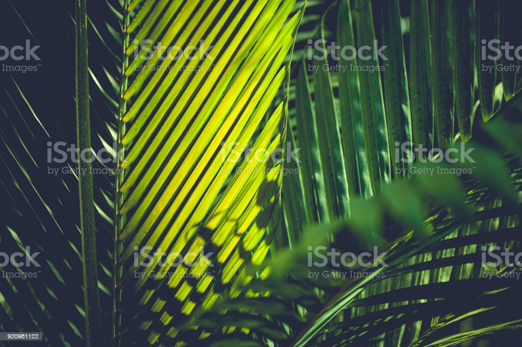 palm leafs background stock photo