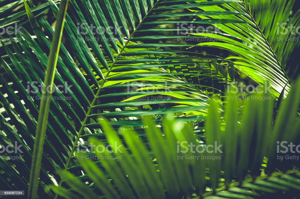 palm leafs stock photo