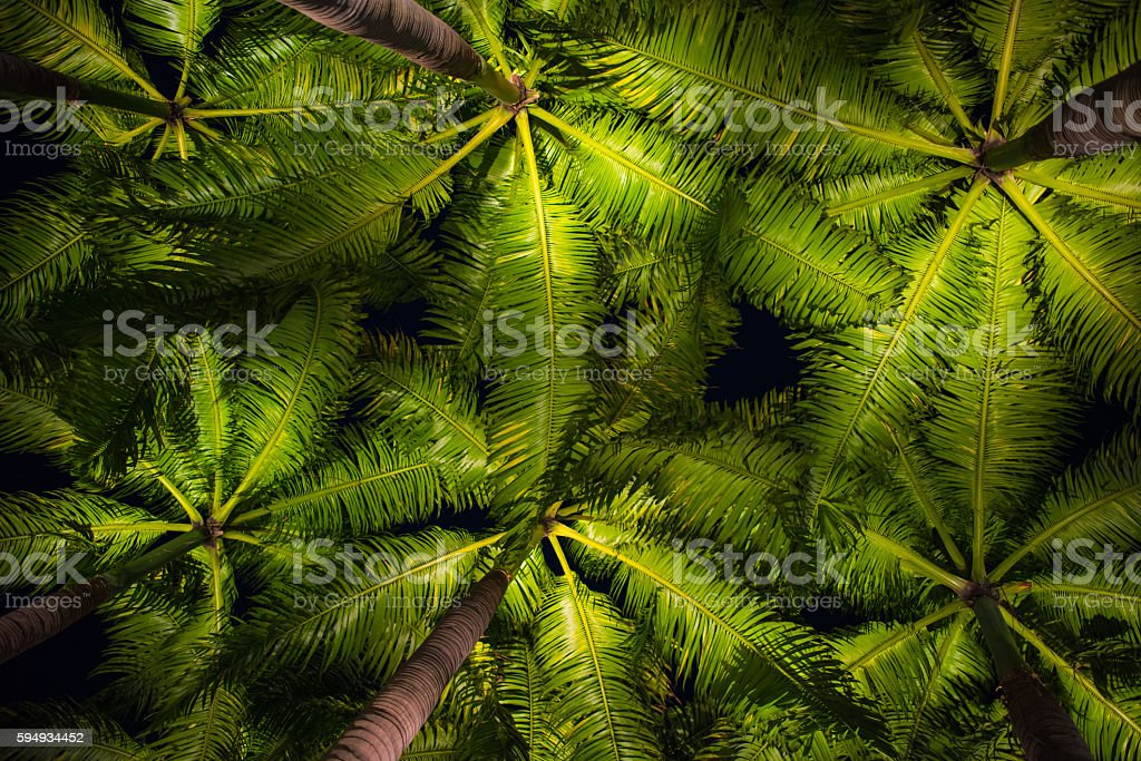 palm leaves abstract backgound – Foto
