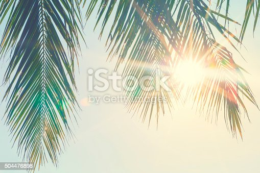 Palm leaves against sunset