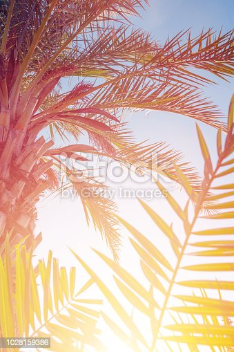 Palm leaves against the sunset. Summer tropical background in blue and orange colors, vintage toned.