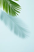 Shadow, Palm Tree, Leaf,Green,Turquoise,Backgrounds,Silhouette