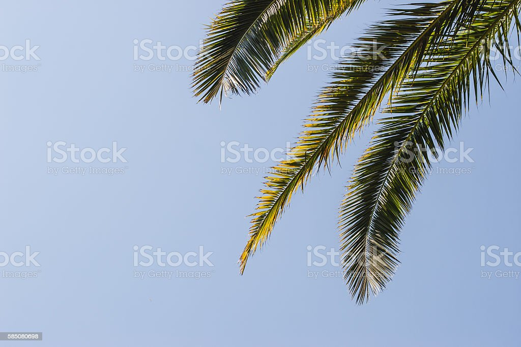 Palm leaves at the right of the blue sky Lizenzfreies stock-foto