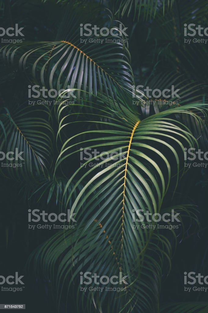 Palm leaves background stock photo