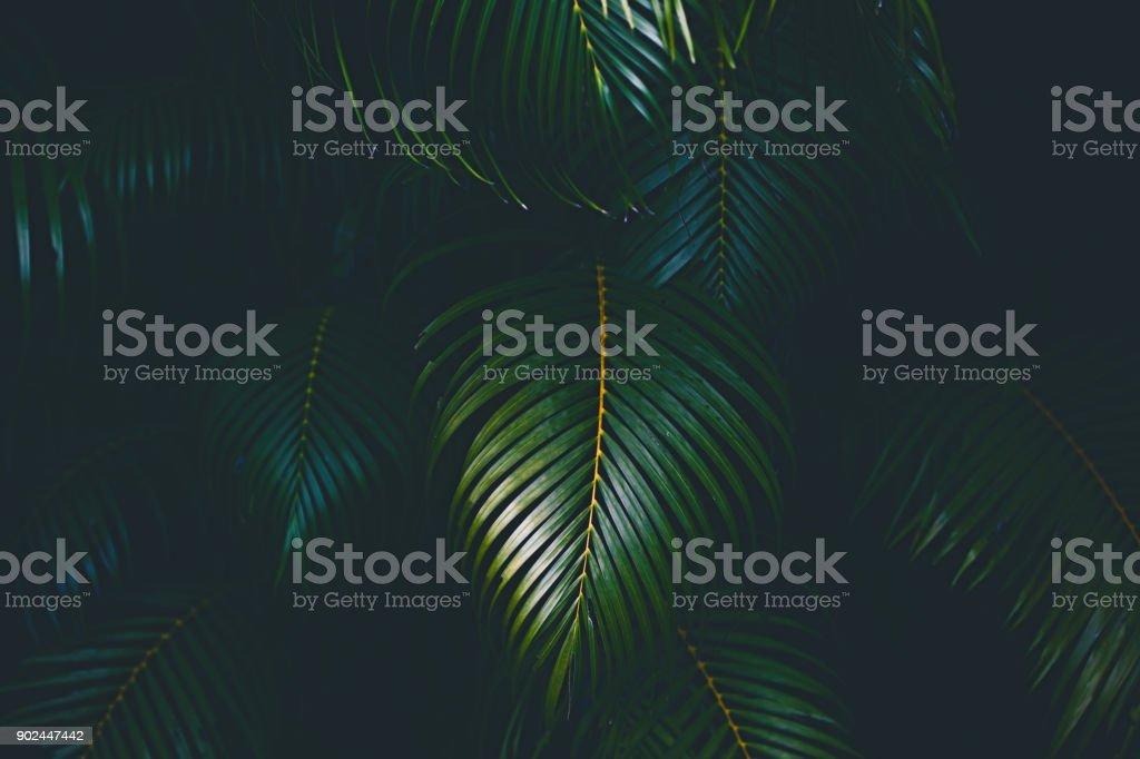 Palm Blätter Hintergrund – Foto