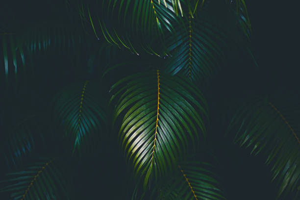 palm leaves background - tropical leaves stock photos and pictures