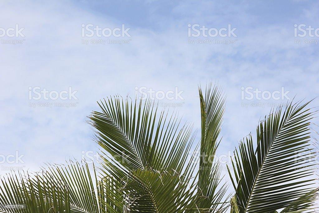 Coconut Palm Trees grow on a Tropical Island, Seychelles, Indian...