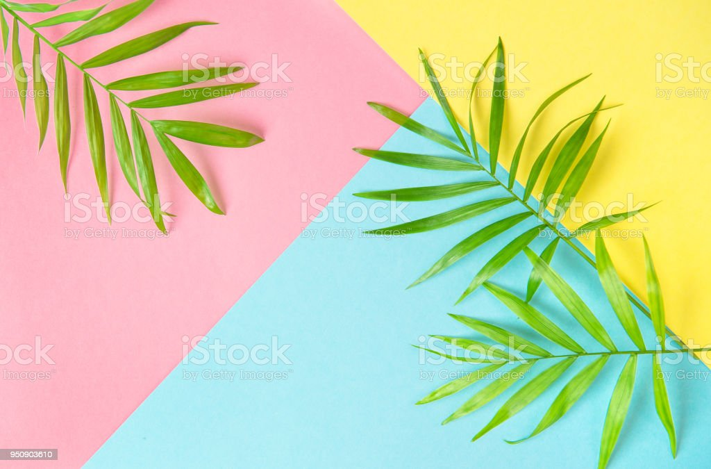 Palm leaves flat lay Summer holidays background stock photo