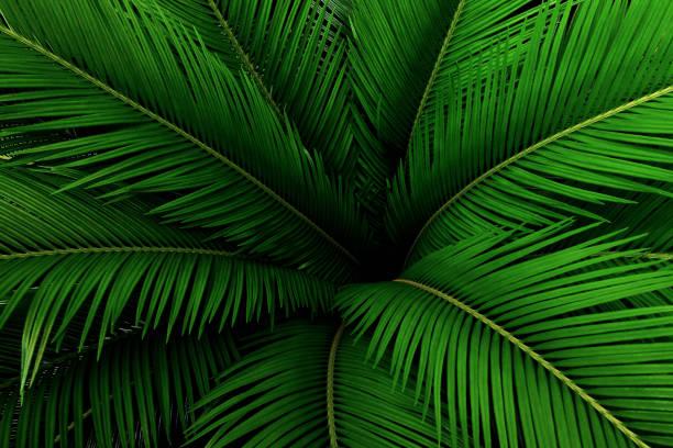 feuilles de palmier motif vert, fond tropical abstrait. - motif tropical photos et images de collection