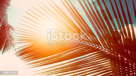 Palm leaves on blue sky background. weekend Holidays tropical beach concept background, Vacation holidays concept. vintage toning