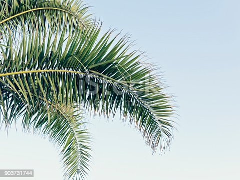 istock Palm leaves on blue sky with copy space 903731744