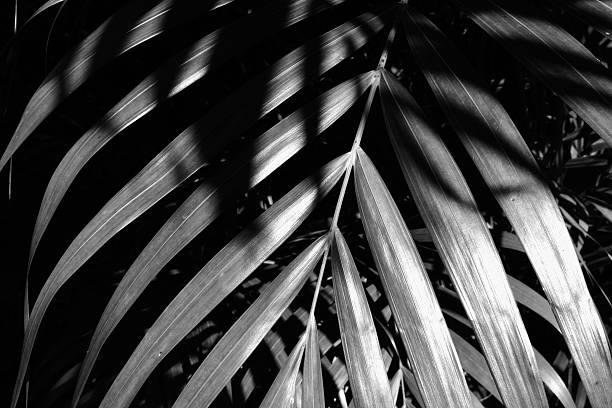 Palm leaves overlapping in sun, high contrast stock photo