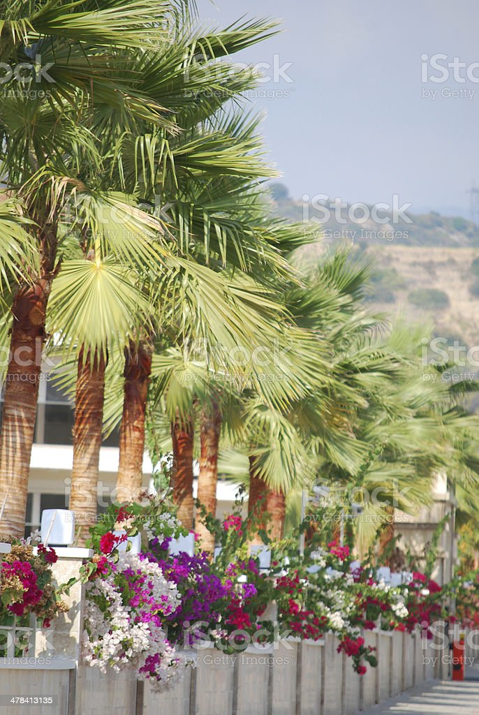 palm leaves stok fotoğrafı