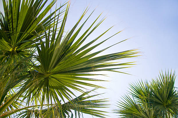 Palm leaves​​​ foto
