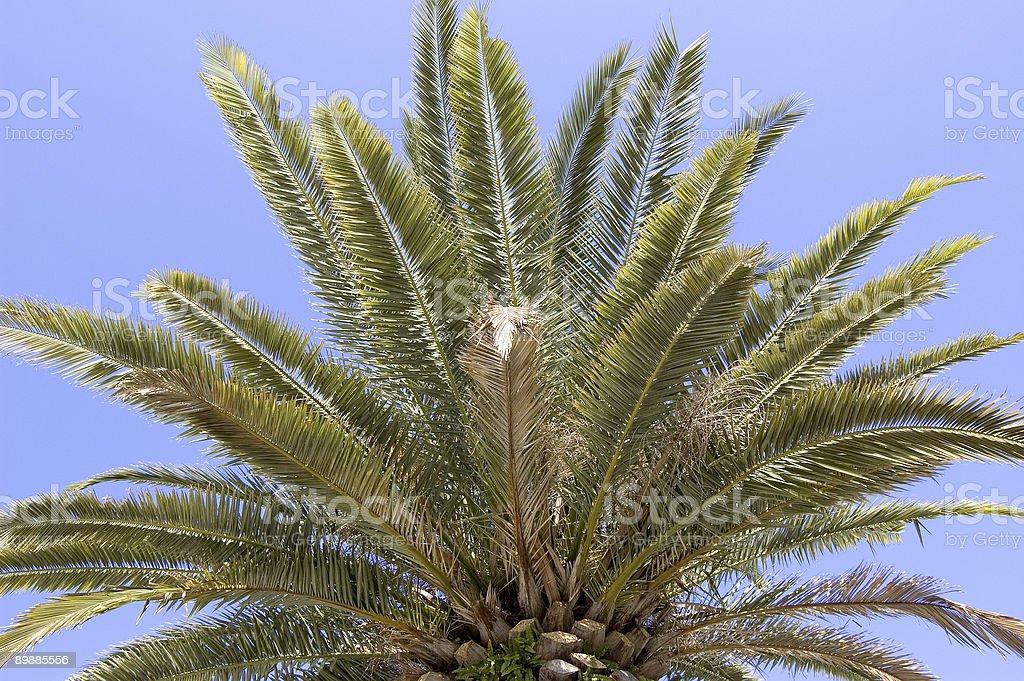 Palm Blätter Lizenzfreies stock-foto