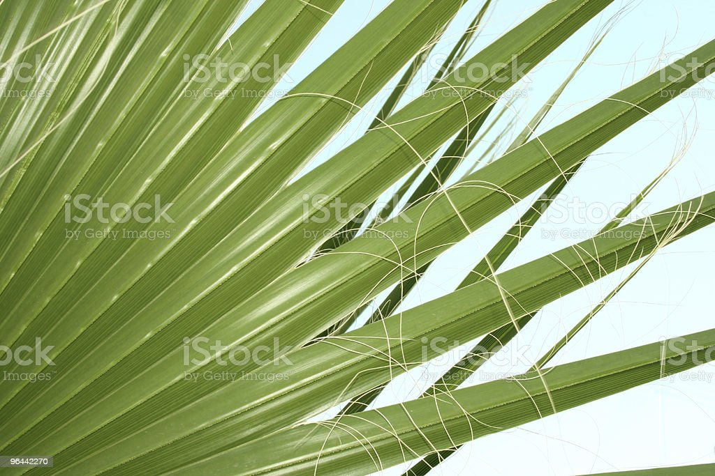 Palm leaves - Royalty-free Backgrounds Stock Photo