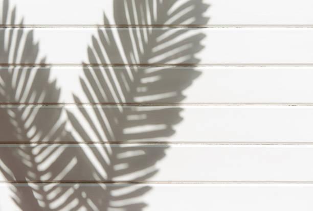 palmblad skugga och trä planka vägg textur bakgrund - solar panel bildbanksfoton och bilder