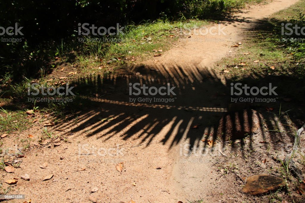 Palm Leaves Shadow, Tropical Shadow royalty-free stock photo