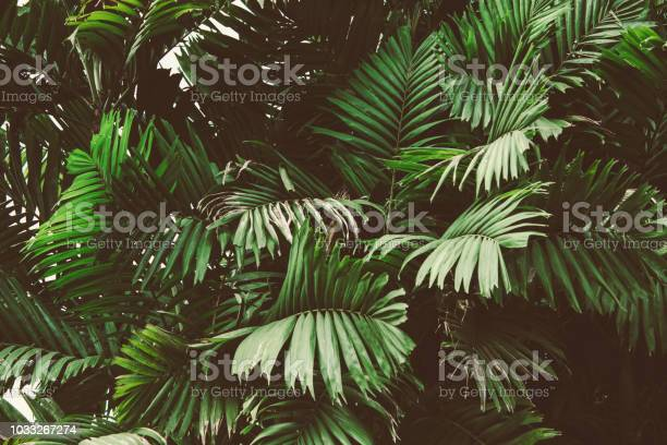 Palm leaves summer tropical background picture id1033267274?b=1&k=6&m=1033267274&s=612x612&h=kkk1nosh5s9x1qkndtzzekrqdvxiohgunksz5htk6ik=