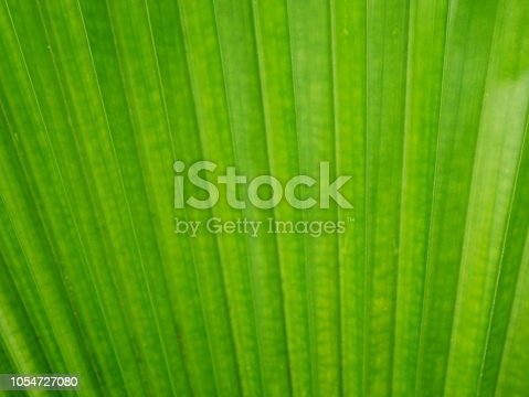 Plant, Abstract Backgrounds, Backgrounds, Leaf, Abstract