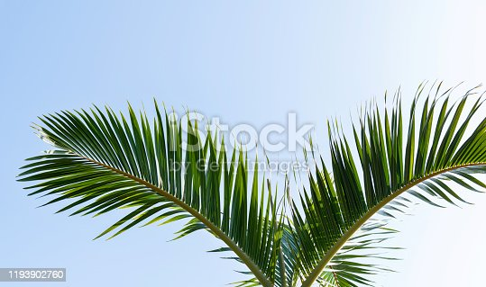 1145102719 istock photo Palm leaves under blue sky 1193902760