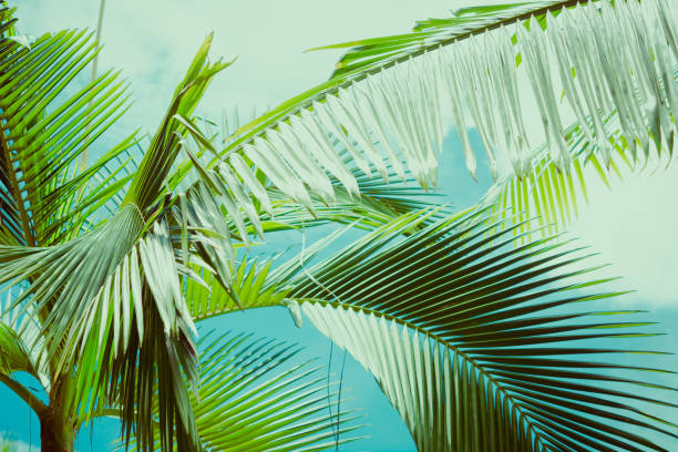 palmblätter unter blauem himmel. tropischen hintergrund. - blumendrucktapete stock-fotos und bilder