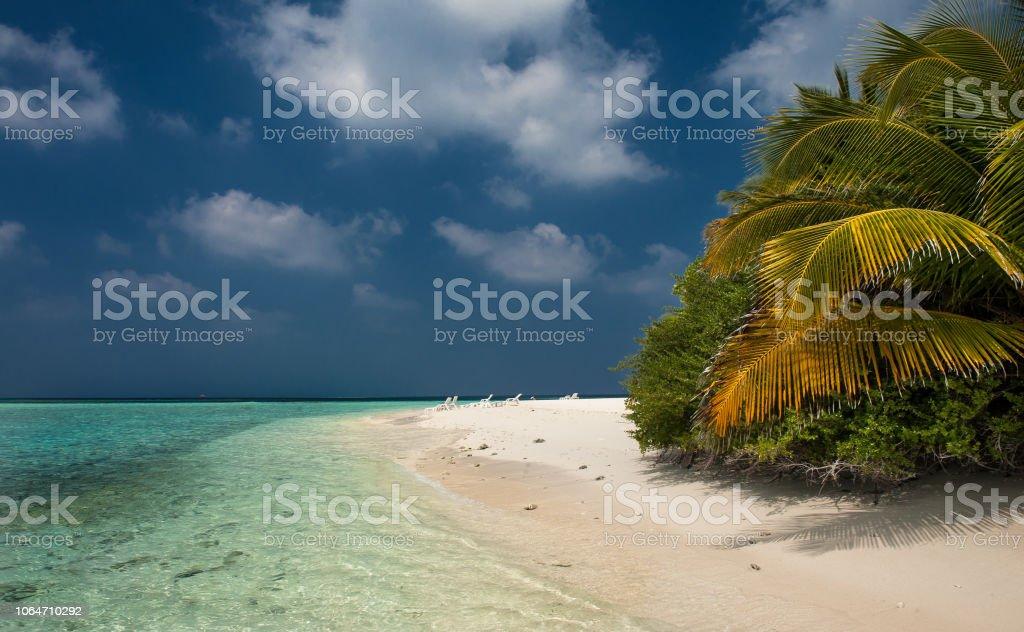 Palmblätter. Tropischer Wald auf der Insel im Indischen Ozean. Wunderschöne Landschaft des feuchten tropischen Dschungel. Bild von einem tropischen Wald-Hintergrund – Foto