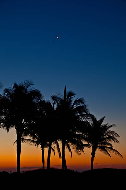 (XXXL) Palm moon Aufstieg – Foto
