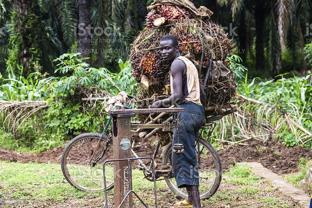 Palm nut - transportation in Burundi stock photo