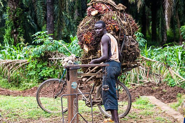 Palm nut - transportation in Burundi stock photo