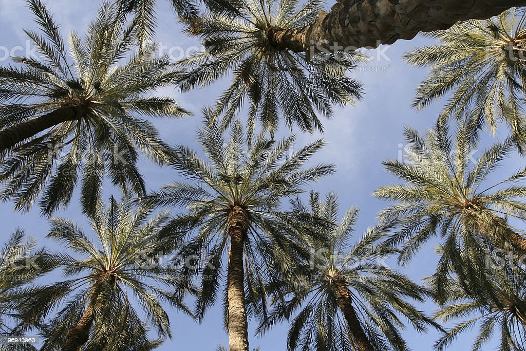 Palm Oasis royalty-free stock photo