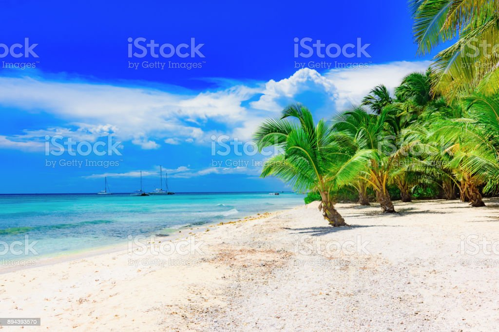 Palm Ocean Sky stock photo