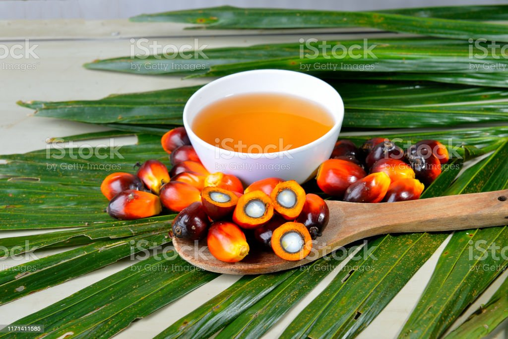 Palm oil, a well-balanced healthy edible oil is now an important energy source for mankind. It comes from the fruit itself (reddish orange). African Oil Palm(Elaeis guineensis). Oil palm originates from west africa but its cultivated in many tropical regions of the world. Indonesia & Malaysia produce about 85% of the palm oil in the world. Agriculture Stock Photo