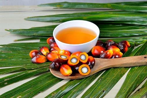 Palm Oil A Wellbalanced Healthy Edible Oil Is Now An Important Energy Source For Mankind It Comes From The Fruit Itself Stock Photo - Download Image Now