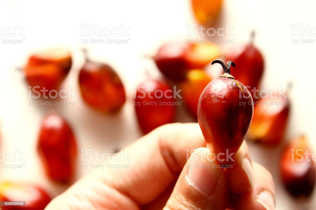 Palm Oil background stock photo