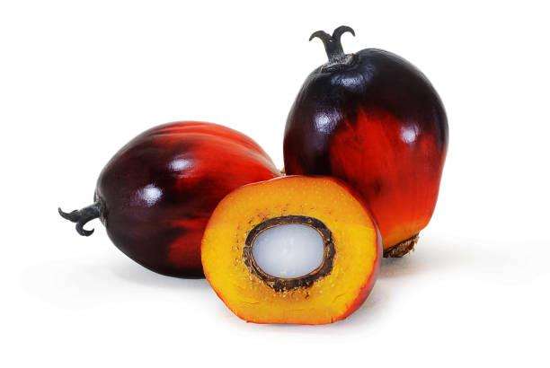 palm oil fruit isolated on white - oleo palma imagens e fotografias de stock