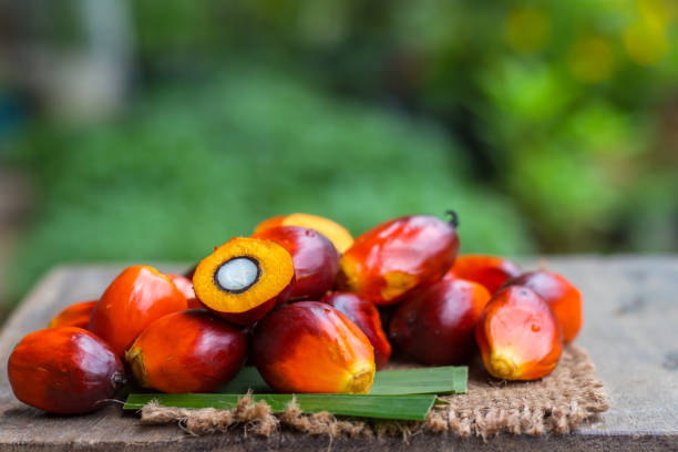 Palm Oil fruit of vegetable oil on old wooden floor. Palm Oil fruit of vegetable oil on old wooden floor. palm oil stock pictures, royalty-free photos & images