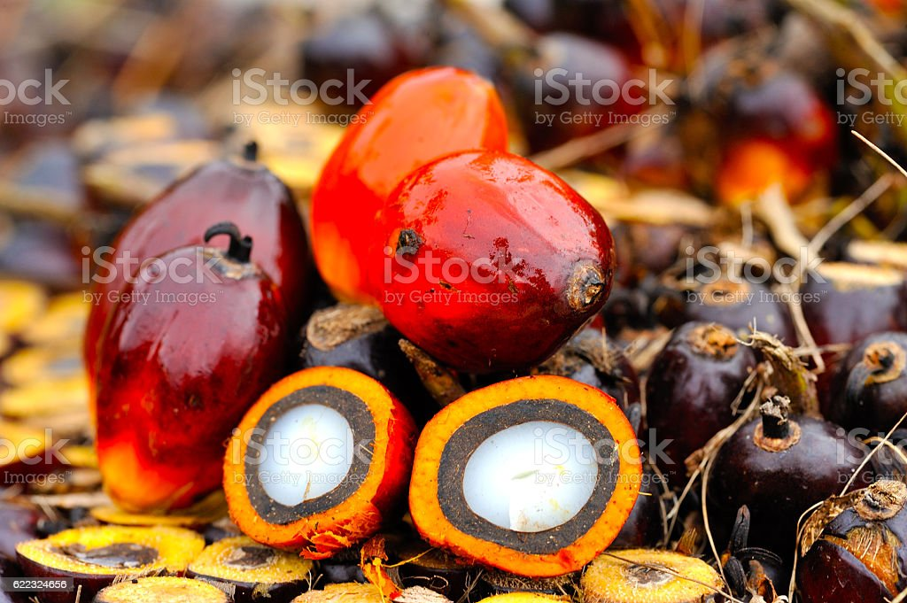 Palm Oil Stock Photo & More Pictures of Agriculture - iStock