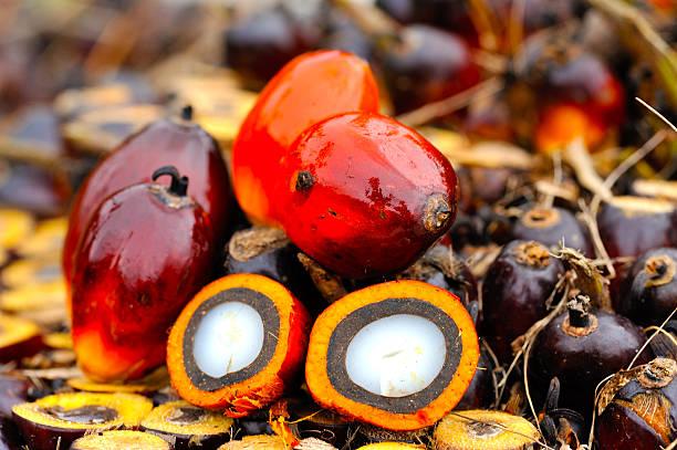 óleo de palma - oleo palma imagens e fotografias de stock