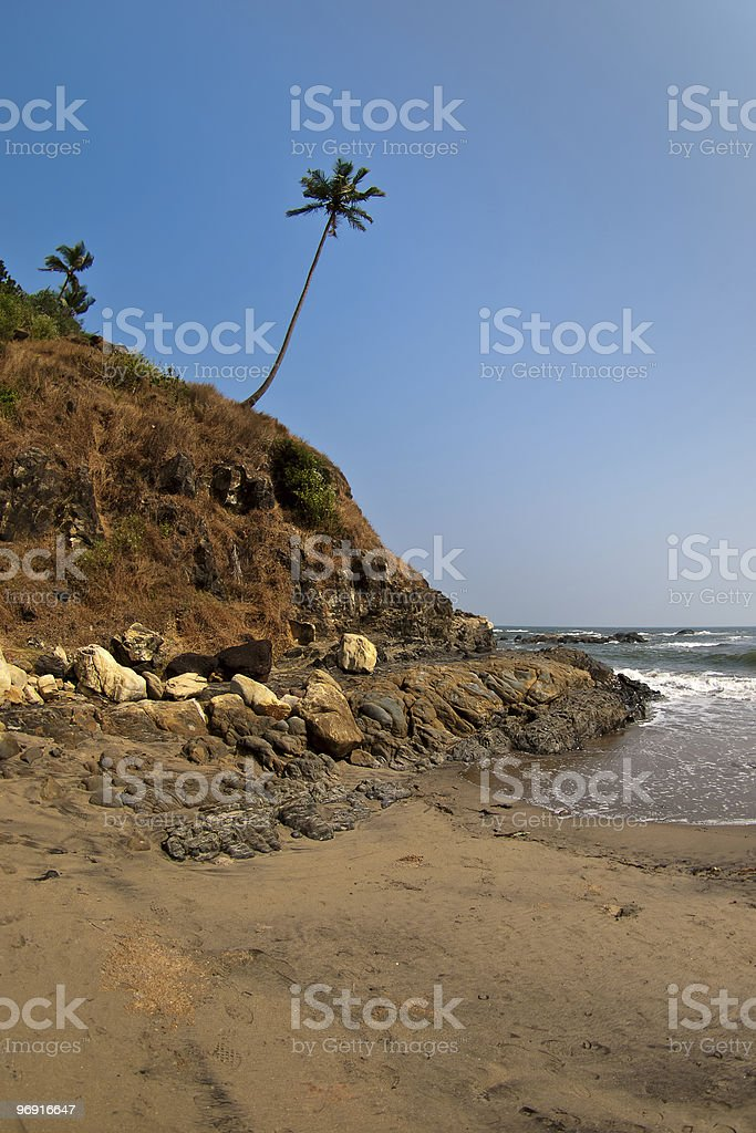 Palm on a hill royalty-free stock photo