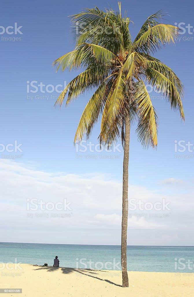 Palm on caribbian beach royalty-free stock photo