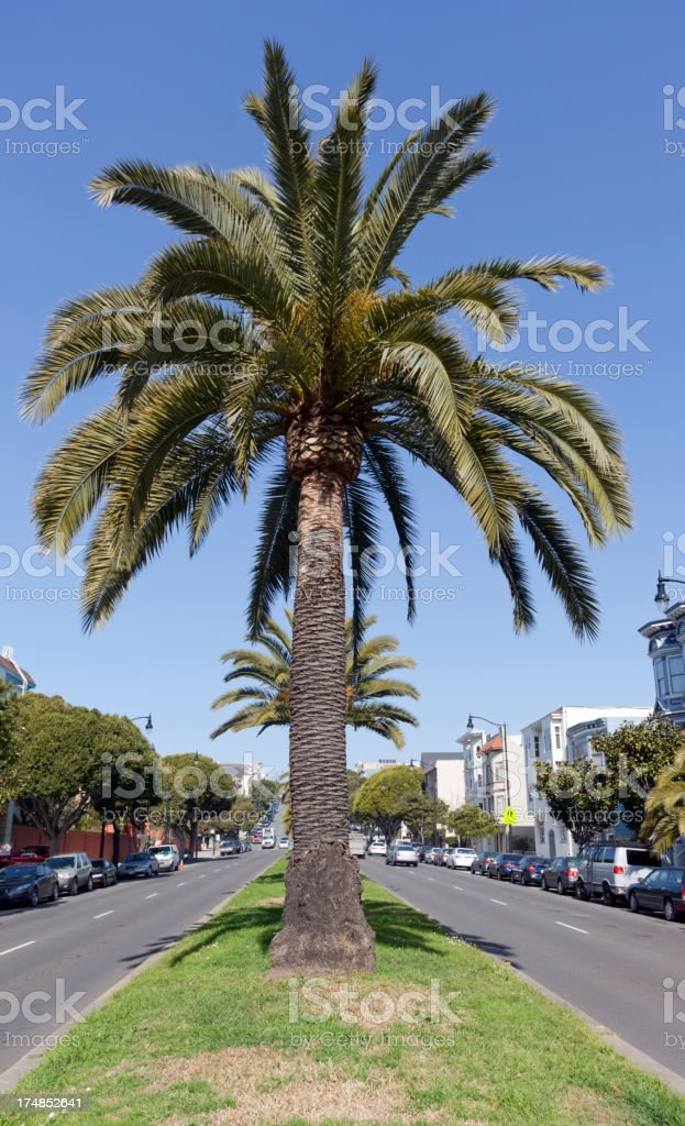 Palm on Delores royalty-free stock photo