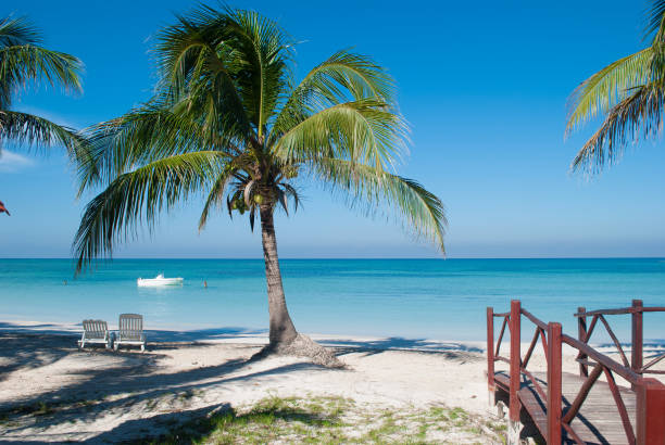 Palm on the beach of Cayo Jutias in Cuba. Boat and blue sea have a rest on the golden sand. Beach in the Gulf of Mexico. – zdjęcie