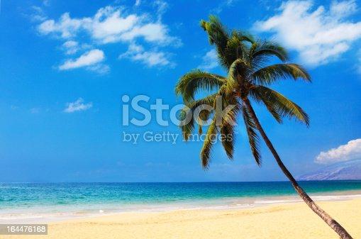 Palm on the Maui beach, Hawaii