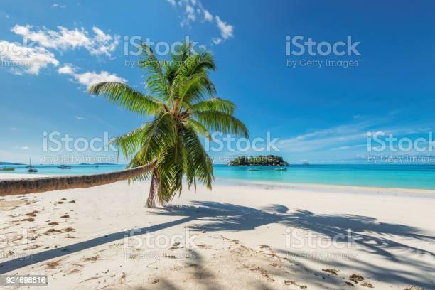 Palm over beach in tropical island picture id924698816?b=1&k=6&m=924698816&s=612x612&h=tszuklevylgo7jxwkzukl mx7nigiasumbrequr7xbu=
