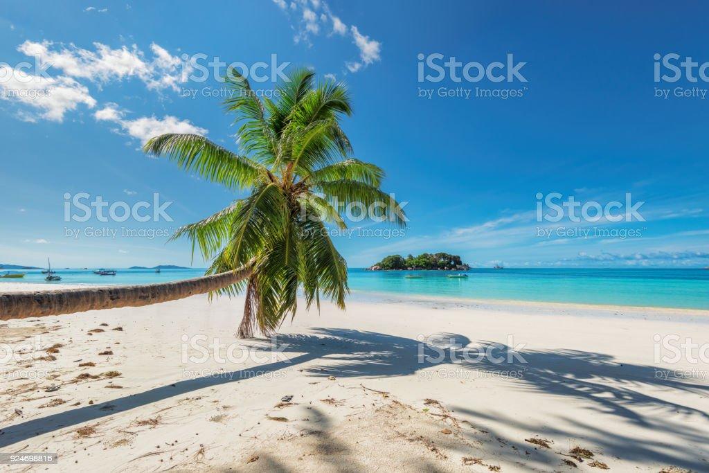 Palma sobre la playa en isla tropical - foto de stock
