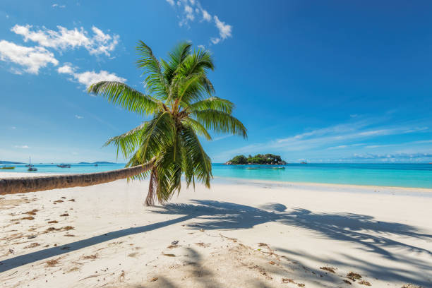 Palm over beach in tropical island stock photo